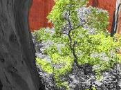 Pixelmator-ed Trees