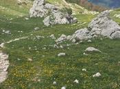 Wildflower Meadows Abruzzo National Park