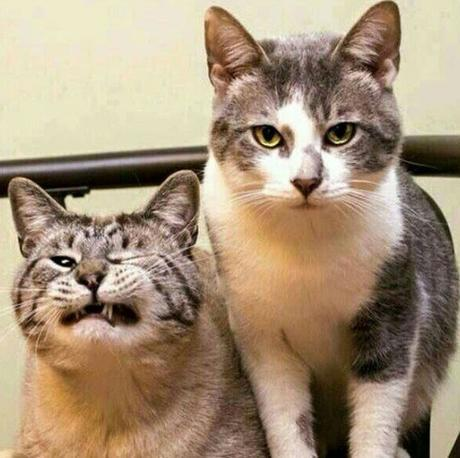 Cat Pulling A Funny Face