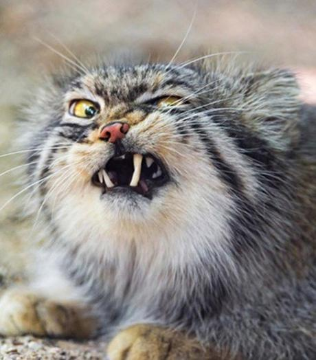 Top 10 Funniest Images Of Cats Pulling Faces Paperblog