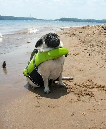 Dog Wearing Beach Safety Equipment