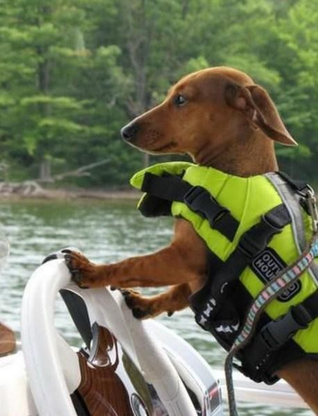 Dog Wearing Boat Safety Equipment