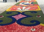 Carpeted with Colour Pattern
