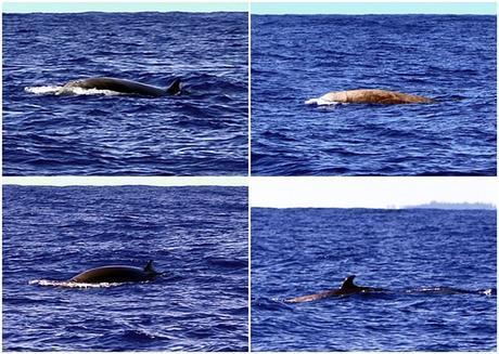2 cetacean id jockeys