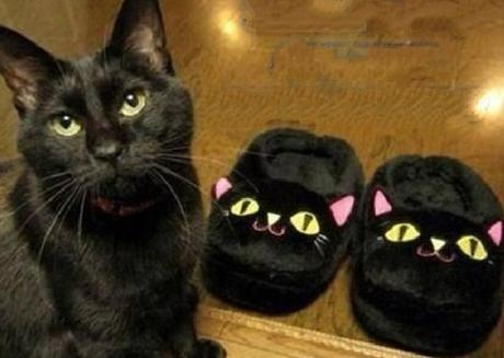 Which One is The Cat?