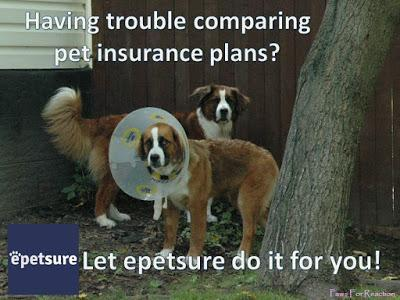 #epetsure: Comparing #PetInsurance plans made easy