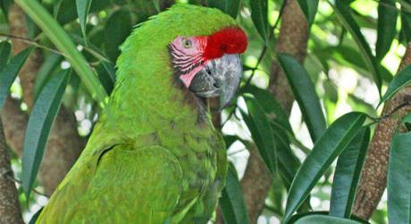 Project Protects Military Macaw Nests from Poachers