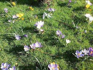 Spring Flower Spotting