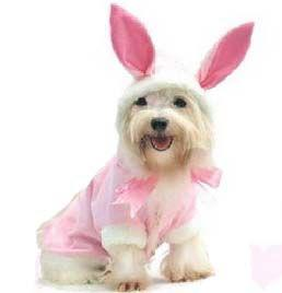 Easter Gifts for Dogs