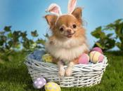 Four Cute Dogs Brighten Your Easter