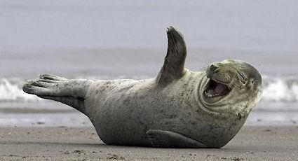 The 26 Happiest Animals In The World