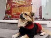 """Sit, Stay""... China's Most Loyal Waits While Owner Works"