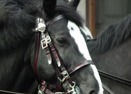 Horsegate: Cameron admits he rode Rebekah Brooks' ex-police horse, Raisa