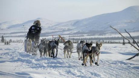 2012 Iditarod Begins Tomorrow!