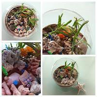 Magical DIY Terrarium Craft