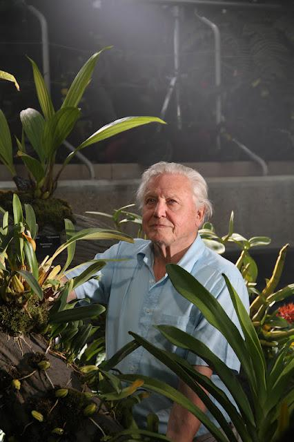 Attenborough announces new 3D plants series