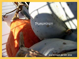 Time to Pick the Pumpkins