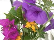 Sunday Bouquet: Scavenged Florida Bouquet