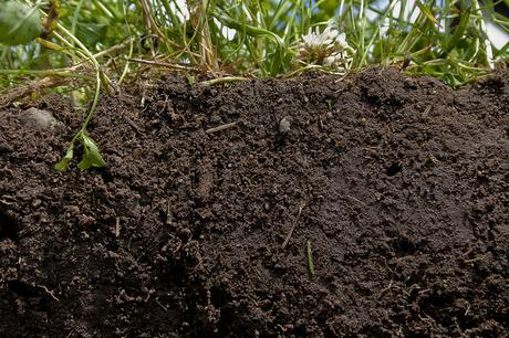 healthy soil-conservation-organic-matter-crops-residue