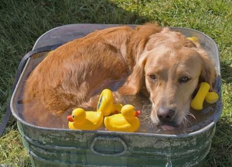 Cool Down Your Dog With a Water Bath