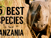 Best Species Tanzania