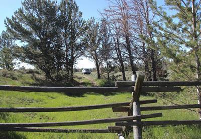 Plants & Rocks: South Pass Rockcress, South Pass Granite