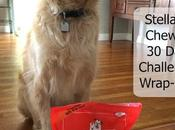 Wrapping Stella Chewy's 30-Day Challenge