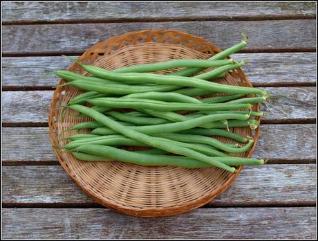 Harvest Monday - 18 July 2016
