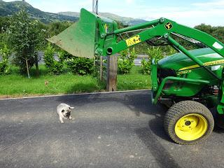 Tractors and Dogs