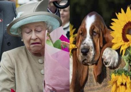 Dog and Queen Hate Flowers