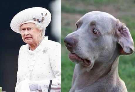 Dog and Queen With a Disgusted Look