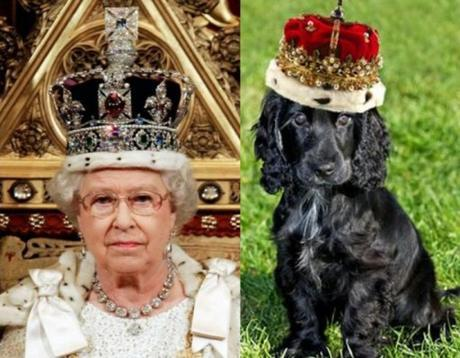Dog and Queen Wearing Crown