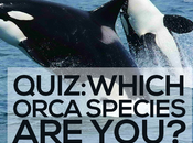 QUIZ: Which Orca Species You?