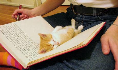 kitten in a book