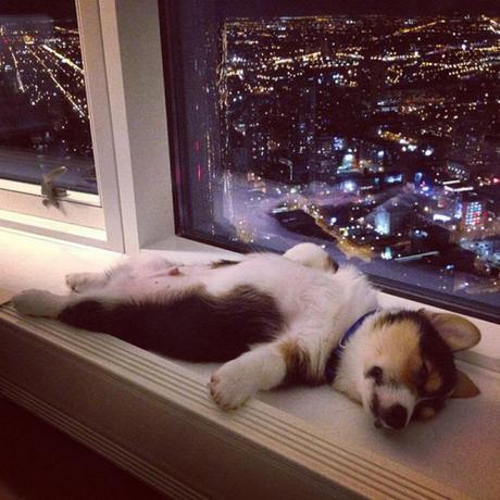 dog sleeps on back