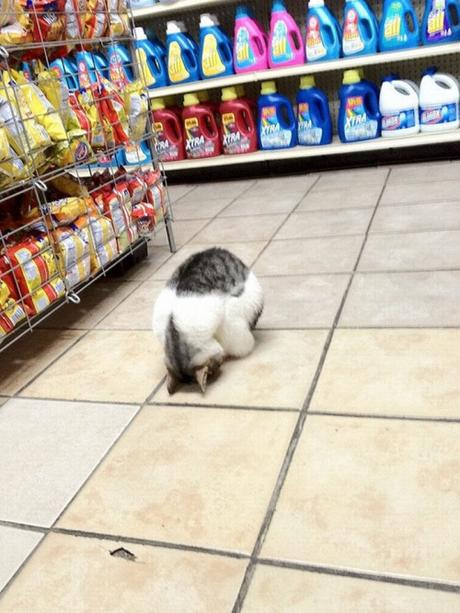 cat sleeps on floor