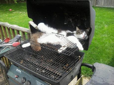 cat in barbecue