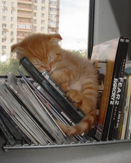 kitten by window
