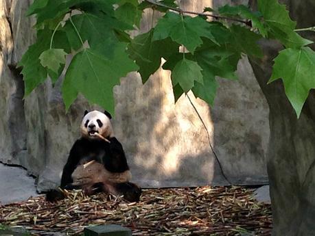 Chengdu Panda Breeding Research Base