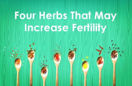 4 Herbs That May Increase Fertility