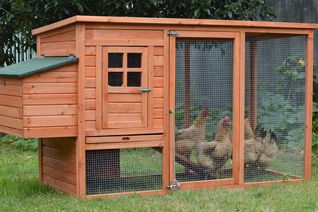 7 Mistakes When Keeping Chickens and Birds as Pets, What To Do and Not To Do To Raise Them Properly