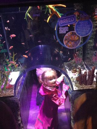 Finding Dory at Sealife Manchester