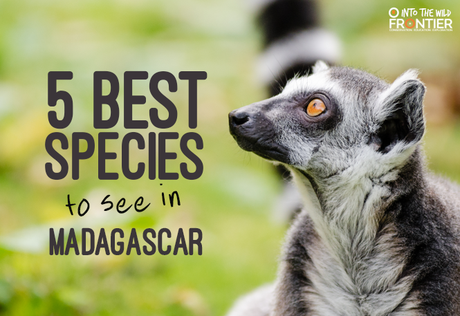 5 Best Species to See in Madagascar
