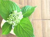 Sunday Bouquet: View Green Hydrangea