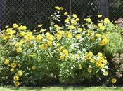 Safe Durable Yard Fence Ideas Chain Link