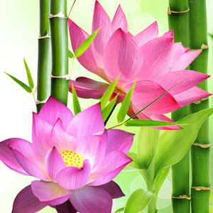 Lotus Blossom Fragrance Oil