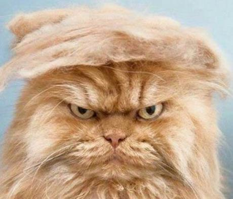 top-10-politically-incorrect-cats-who-lo