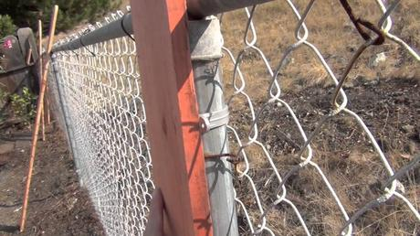Install Base Wire On A Painting Chain Link Fence
