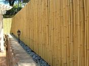 Using Bamboo Fencing Rolls Wall Coverings