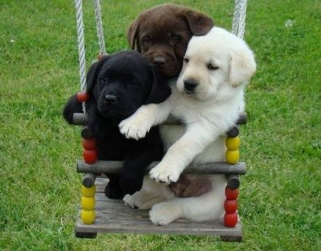 Dogs on Playground Swing